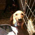 Hortolândia é a cidade com mais registros de abandonos de animais, segundo ONGs