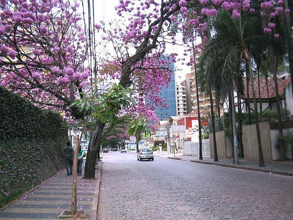 Centro fica para trás e Cambuí é o bairro preferido dos campineiros para morar