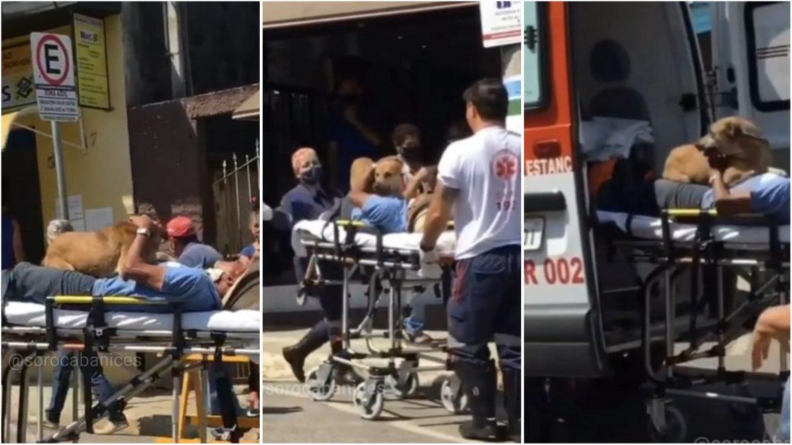 Homem passa mal, e cachorro pula em maca durante remoção pelo Samu, que autoriza viagem