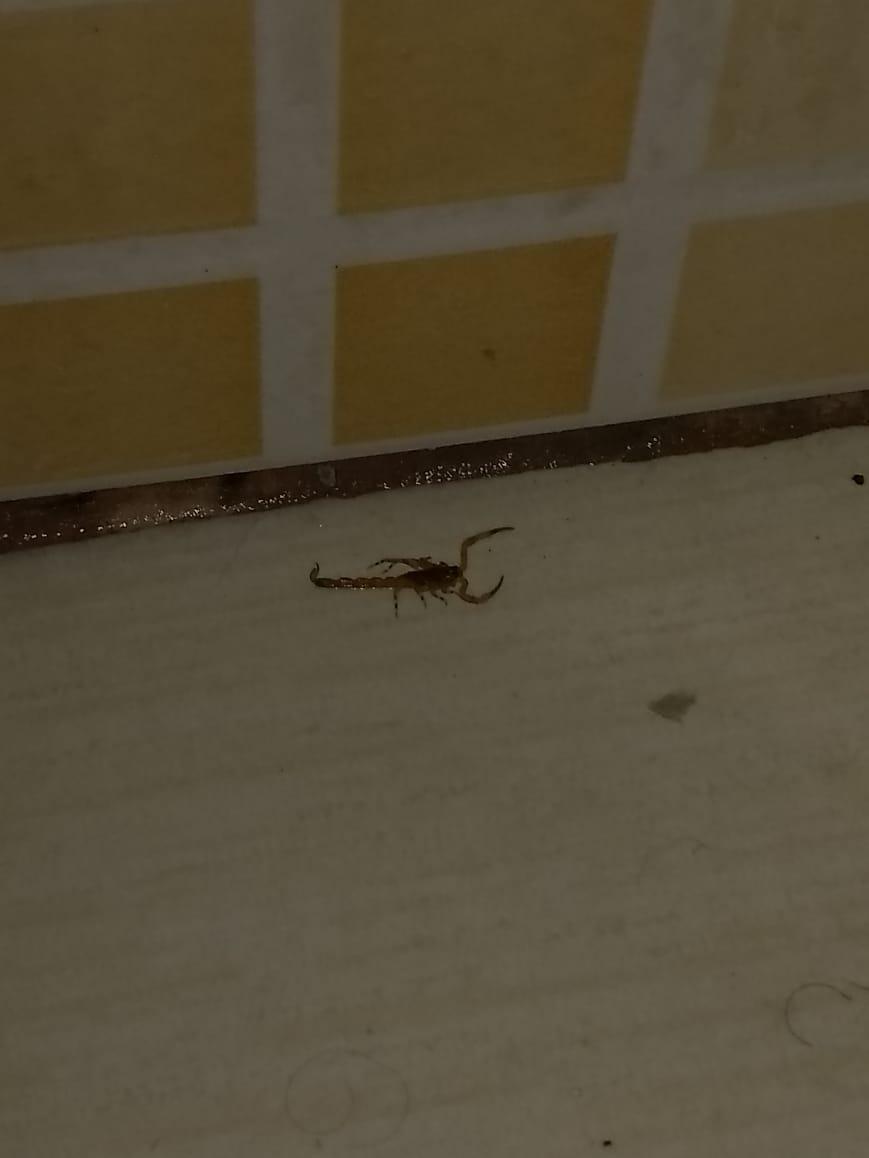 """Bairro de Campinas está infestado de escorpiões, mas prefeitura """"empurra"""" problema"""