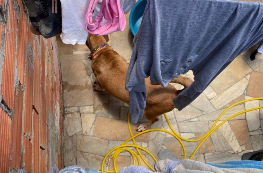 Menino no barril: cachorros encontrados na casa estão em lares temporários