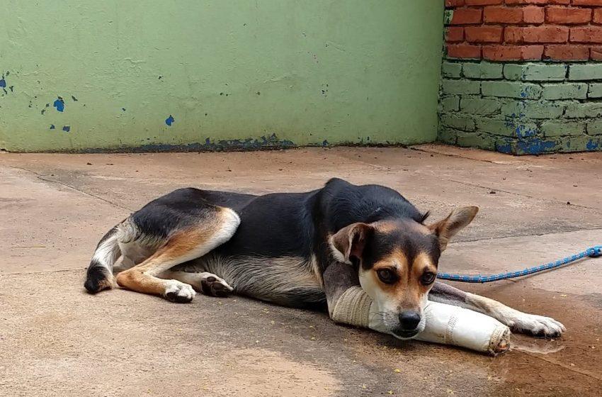 Dário Saadi sanciona lei que institui o Banco de Ração para Animais em Campinas