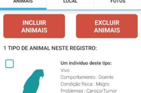 Usuários podem inserir dados sobre a fauna campineira em um aplicativo da Fiocruz; Veja como baixar