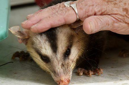 Animais feridos resgatados são acolhidos e tratados no Bosque dos Jequitibás em Campinas